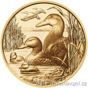 Zlatá mince 100 Eur-Kachna divoká-rakouská série Wild life 2018